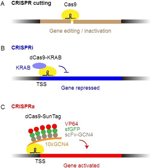 Cartoon explaining CRISPR techniques