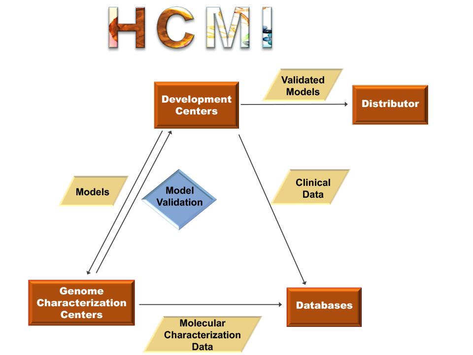 flow chart depicting the human cancer model development process