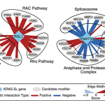 Genetic interaction partners involving two KRAS synthetic lethal genes identified in this study, RGL1 and DNMT3A, and associated pathways enriched for genetic interactions.